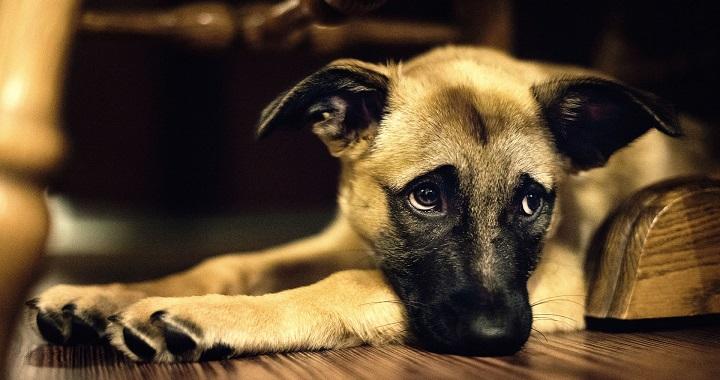 causas de la depresion en perros