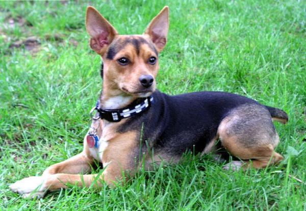 causas de la enfermedad de Von Willebrand en perros