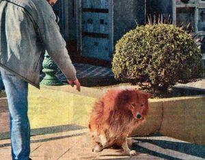 Hasta dónde crees que puede llegar la fidelidad de un perro