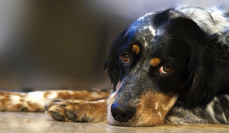 como detectar la epilepsia en perros
