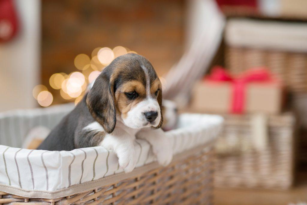 cómo educar a un cachorro para que se porte bien en casa