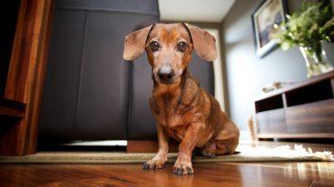 como eliminar el olor a perro en casa