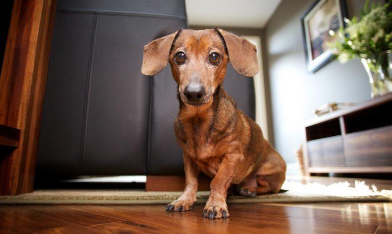 C mo quitar el olor a perro en casa consejos y remedios - Eliminar olor tabaco casa ...