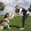 Cómo enseñar trucos a mi perro