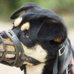 Cómo hacer un bozal para un perro en casa