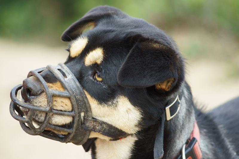 como hacer un bozal para perro