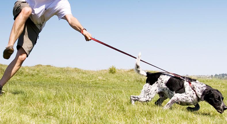 Cómo pasear a un cachorro