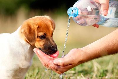 Cómo prevenir el moquillo en perros