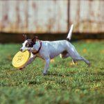 Cómo puedo enseñar a mi perro a traer la pelota