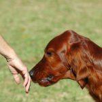 Cómo puedes acercarte a perros desconocidos