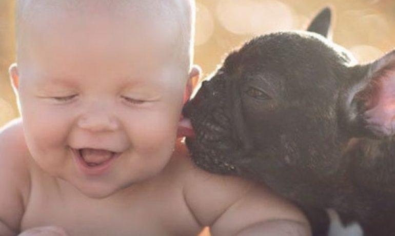 comportamiento del bulldog francés con los niños