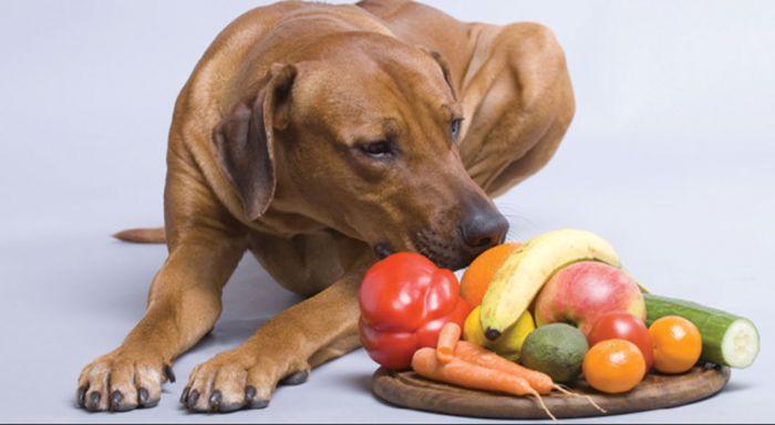 Consejos antes dar fruta a tu perro