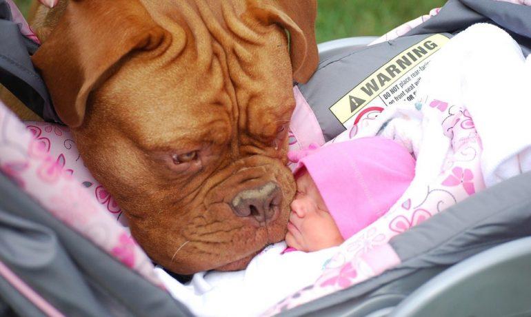 como preparar a mi perro para la llegada de un bebe
