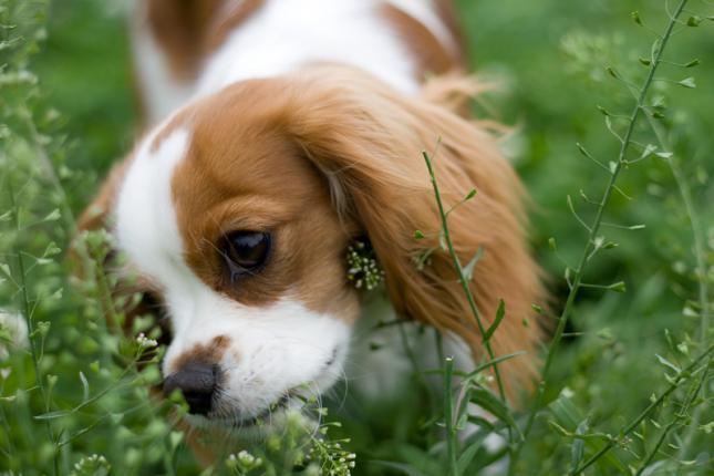 consejos y advertencias sobre el shock anafilactico en perros