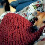 cuál es la temperatura corporal de un perro