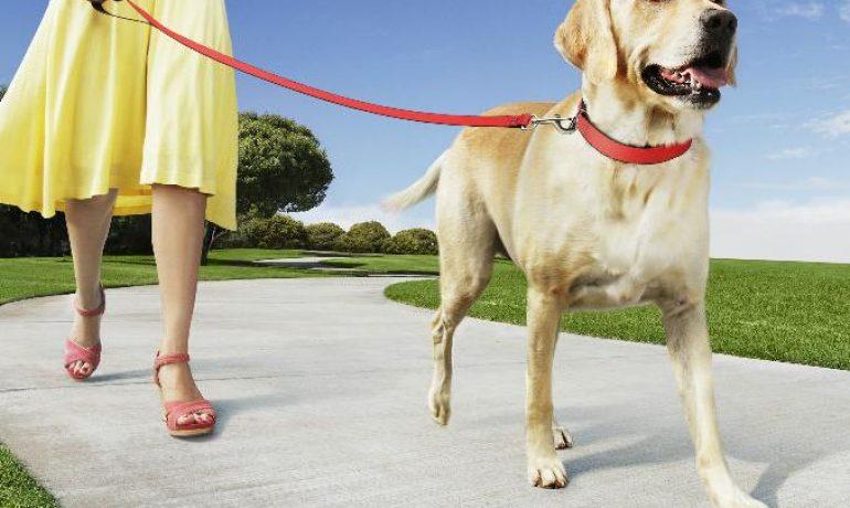 Cuántas veces debo sacar a pasear a mi perro