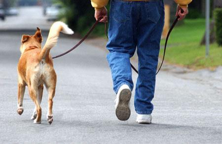 Cuantas veces tengo que sacar a pasear a mi cachorro