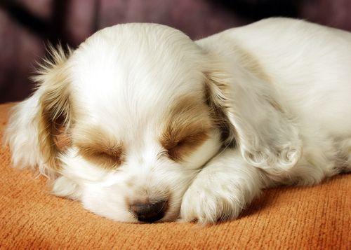 Cuánto puede llegar a dormir mi perro