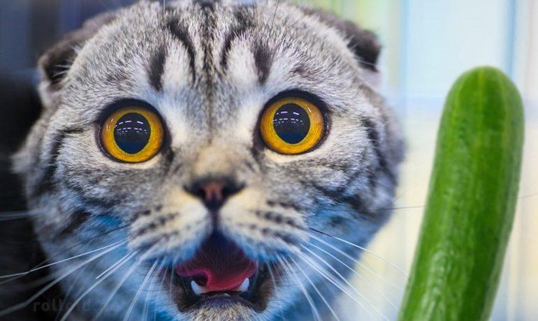 el misterioso caso de gatos y pepinos