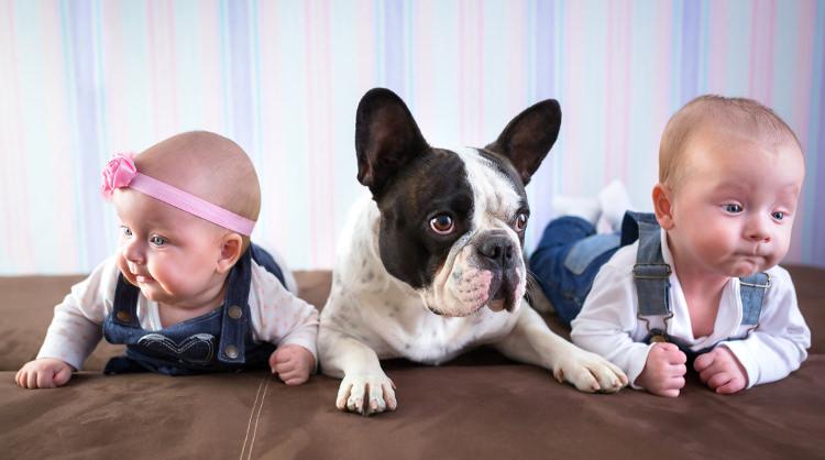 Comportamiento Del Bulldog Francés Con Los Niños Wakyma