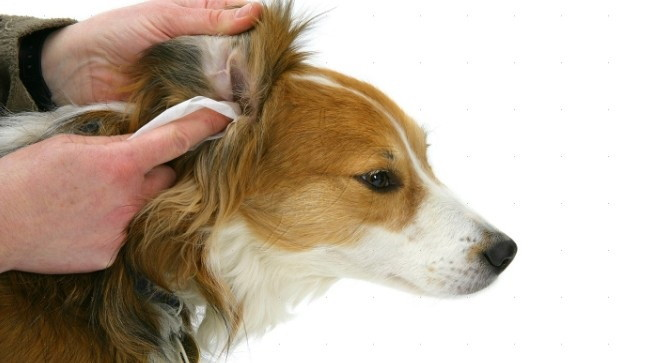 Movimiento natural de la cabeza del perro