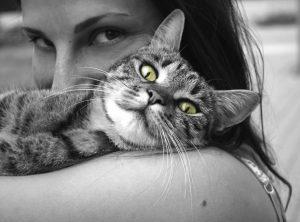 enfermedades que transmiten los gatos