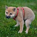 Cu ndo se puede ba ar a un cachorro todo sobre la higiene de perros - Cuando se puede banar a un cachorro ...