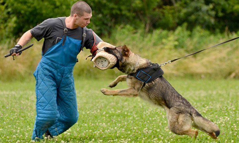 entrenamiento perro guardian