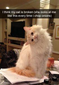 Snapchat y gatos los más adorables