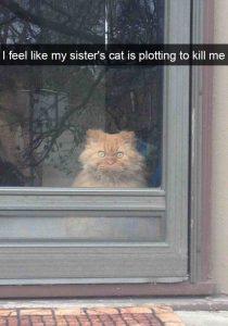 Snapchat y los gatos que dan mas miedo
