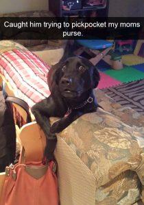 Snapchat y los perros mas traviesos