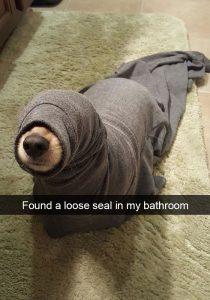 Snapchat y mascotas los más divertidos