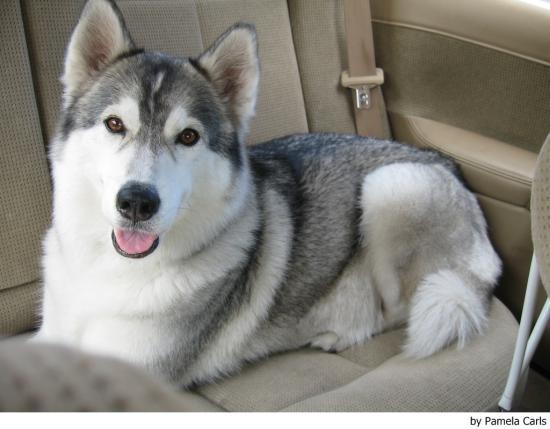 heces blandas en perros