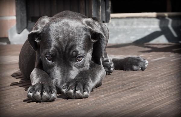 Combatir el mal aliento canino con remedios caseros