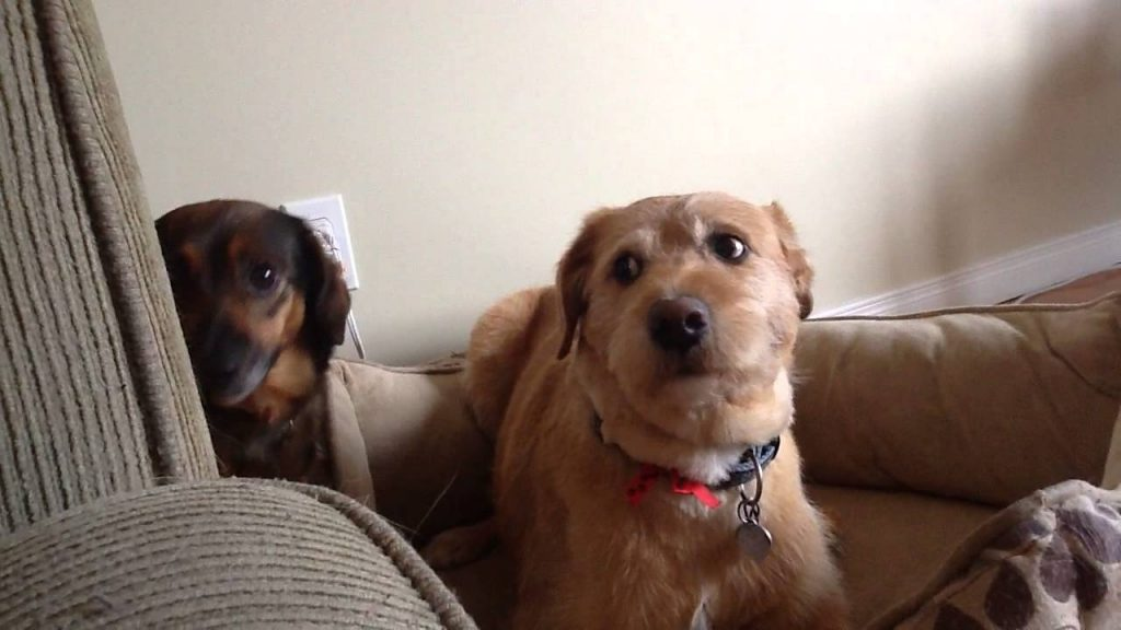 Los perros sienten celos