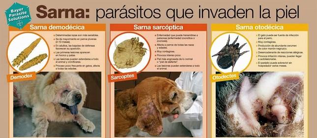 Como se cura la sarna demodecica en perros