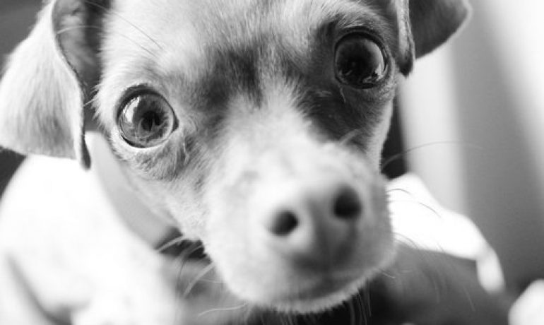 mi-perro-me-mira-fijamente