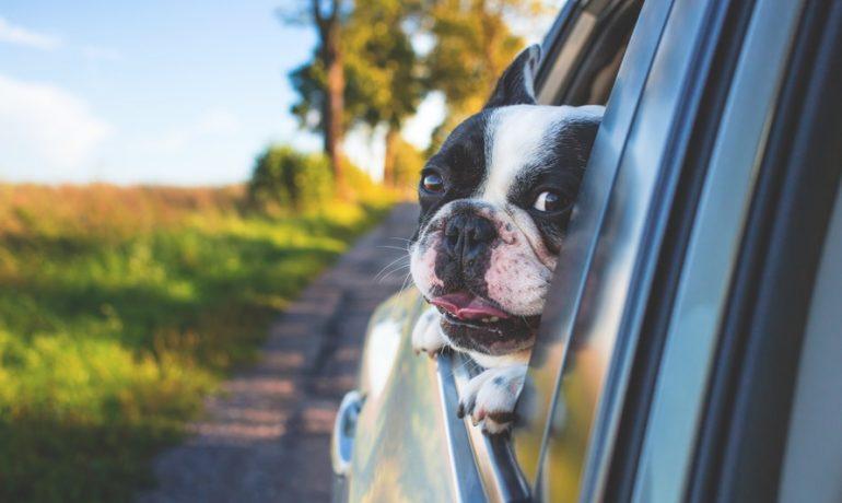 Mi perro se pone nervioso en el coche