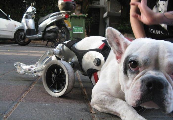 mielopatía degenerativa en perros