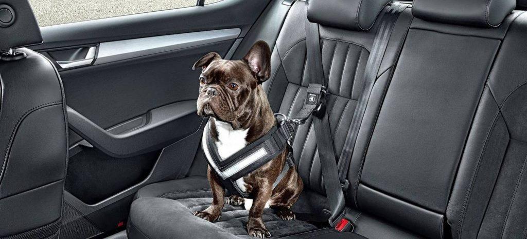no-te-olvides-del-cinturon-de-seguridad-para-perros