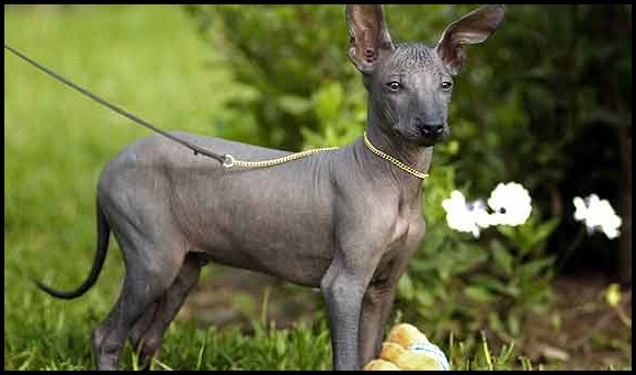 Origen del perro pila argentino