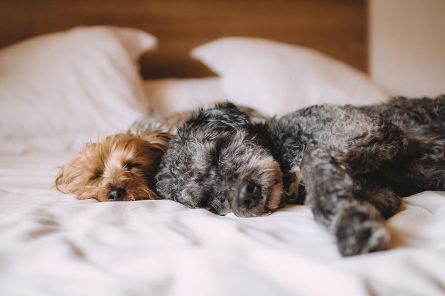 Por qué los perros duermen tanto