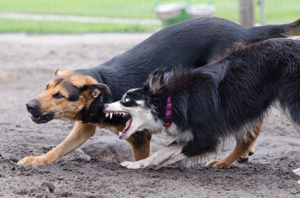 Puedo prevenir o evitar que mi perro ataque a otros perros
