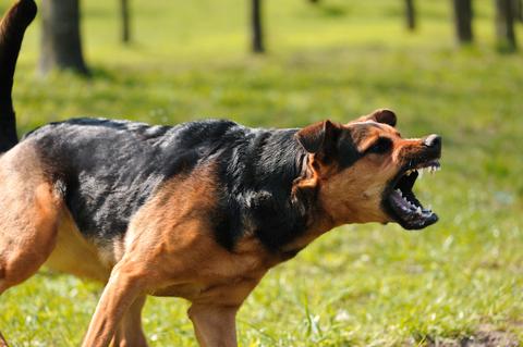 Qué causas pueden hacer que mi perro ataque a otros perros