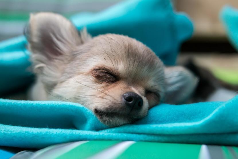 Qué cosas influyen a la hora de que tu perro se duerma
