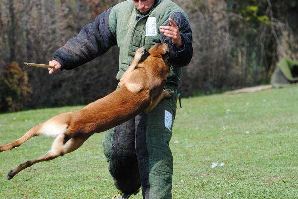 Qué es el entrenamiento schutzhund