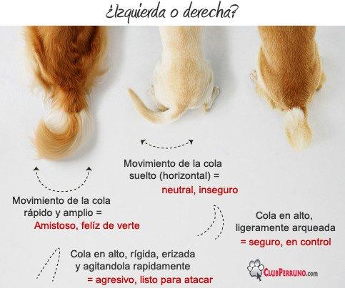 Qué significa cada movimiento de la cola en los perros