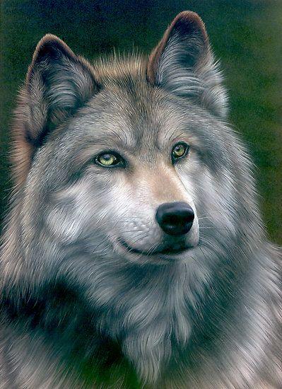 razas de perros muy grandes perro lobo checoslovaco