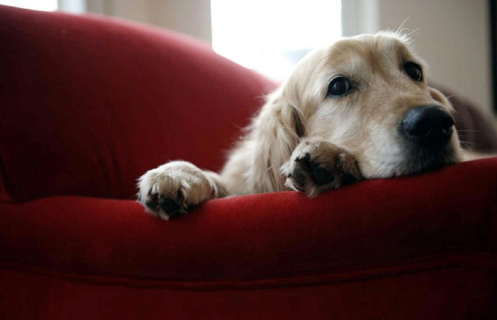 sindrome postvacacional en perros