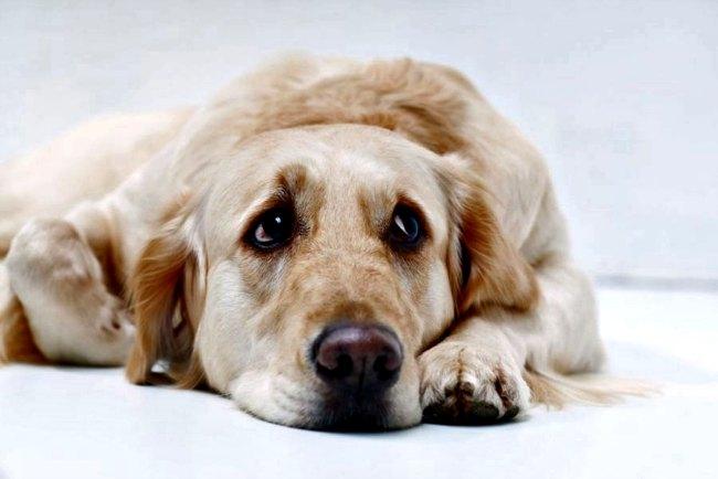 sintomas de la depresion en perros